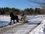 Raspotnik Bracken pulling maple sap sleigh.