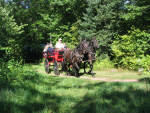 Macy and Lacy (Parbred Dales Ponies) pulling wagon.